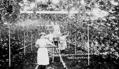 Studley Castle Horticultural College for Women. Grapehouse, interior view, Students tending grapevines. 1910s. Photo - Warwickshire County Council